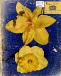 Russell Village Women's Institute Scrapbook 1946-50