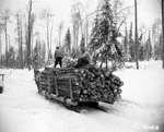 Logging - Horse Drawn Sleigh
