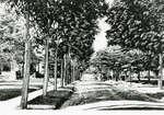 Young Street, Kitchener, Ontario