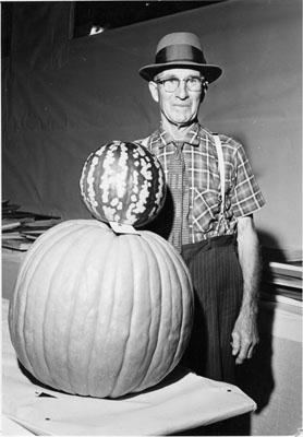 Fall Fair, Milton.  Largest pumpkin in show.