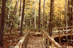 Woods around Crawford's Lake, Campbellville, Ont.