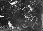 Lady driving horse and buggy