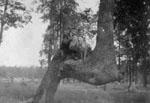 Two men and dog perched on trunk of tree