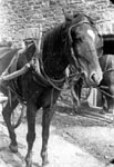 Horse pulling wagon