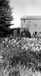Martin's Grist Mill.  Milton, Ontario