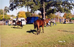 Equestrian Event, Milton Fairgrounds