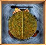 Turtle drum