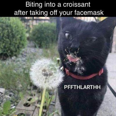 Croissant Facemask meme