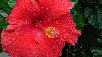 Raindrops on a Petal