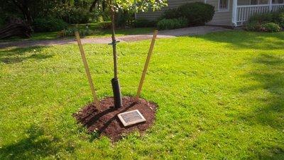Sovereign House White Oak tree commemorating OHA District 6 AGM