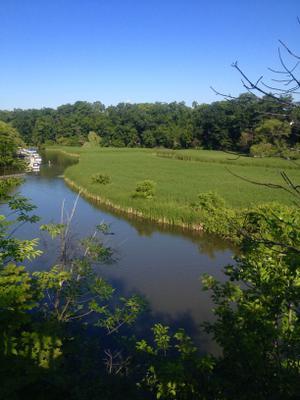 Morning at the Creek