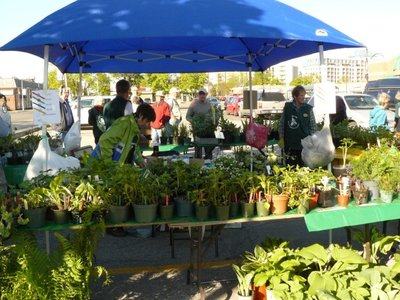 Bronte Horticultural Society plant sale, 23 May 2015