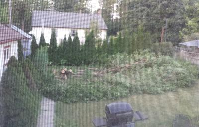 So long Mulberry tree
