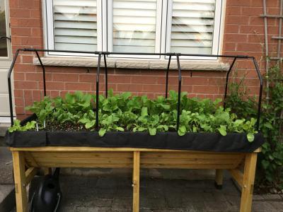 Urban Vegetable Garden in a Small Space