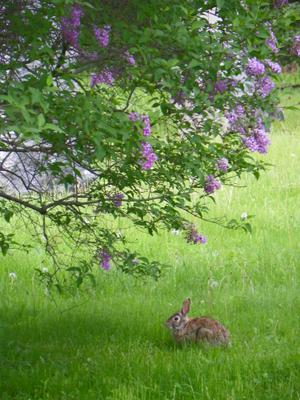 A Visitor to Oakville/St. Mary's Cemetery