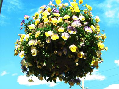 Flower Baskets in Town Square