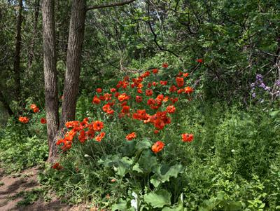A Slash of Red Among the Green