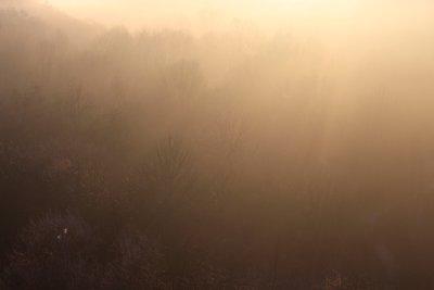 Sunrise over 16 Mile Creek