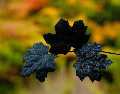 Autumn Decor Juxtaposed on Fall Colour
