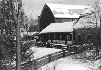 Old Patterson barns and Angus cattle paddock