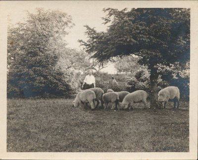 Man with sheep