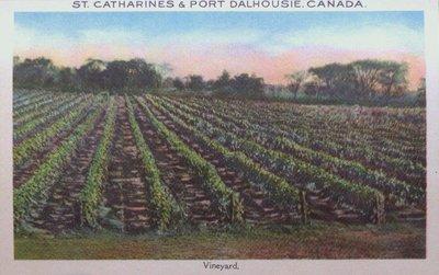 Souvenir view of St. Catharines & Port Dalhousie: A Vineyard
