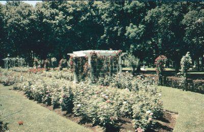 Montebello Park Rose Garden