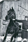 Alma with horse