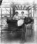 Two Women in a Buggy