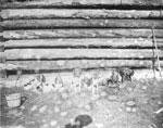 Hounds Outside of a Log House, circa 1890