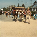 Man With Cows, South River Agricultural Society Fall Fair Parade, 1984