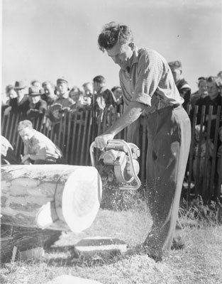 Man Almost Finished Chainsawing a Log,  South River Agricultural Society Fall Fair, circa 1950