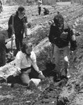 Julie Morris and Brian McNeil Planting Trees, Machar Township Agreement Forest, May 20, 1964