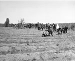 South River School Children Planting Trees, Machar Township Agreement Forest, May 20, 1964