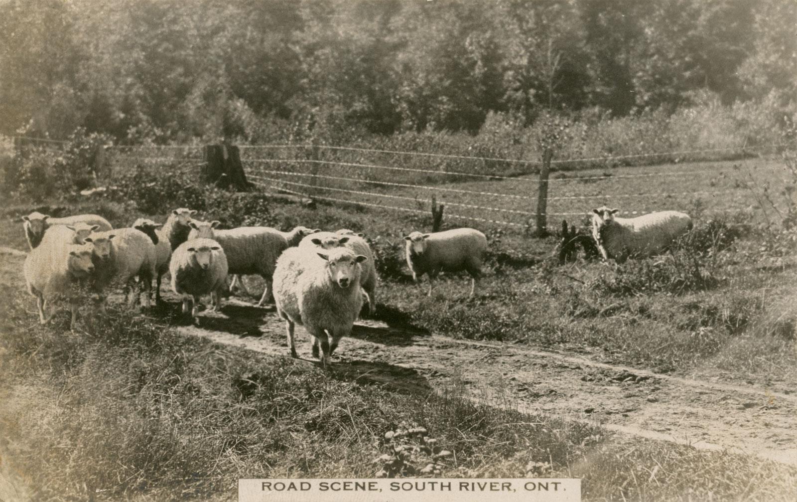 Postcard of Road Scene South River, circa 1920