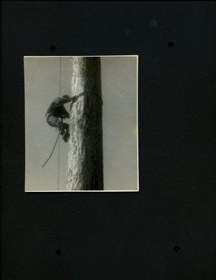 Photograph of Logger Sports - Log Climbing