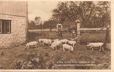 """Post Card: """"A Few of the Money Makers At The Walker House Farm, Oakville & Toronto, Ont."""""""