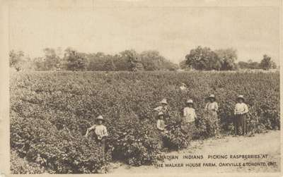 "Post Card: ""Canadian Indians Picking Raspberries at the Walker House Farm, Oakville & Toronto, Ont."""