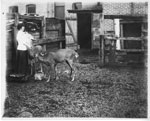 Annie Bellerose with Thomas Moore's Pet Deer, Thessalon, circa 1911