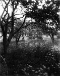 Back orchard of old home, ca.1890's.  Cavendish, P.E.I.
