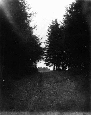 Lovers' Lane end view, ca.1890's.  Cavendish, P.E.I.