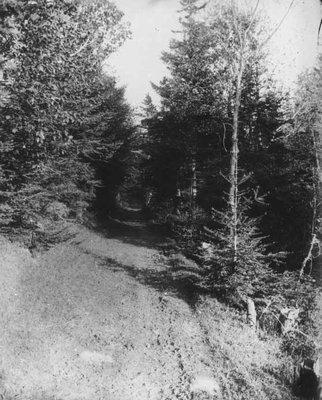 Lovers' Lane far gate view, ca.1890's.  Cavendish, P.E.I.