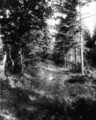 Lovers' Lane near gate view, ca.1890's. Cavendish, P.E.I.