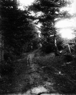 Lovers' Lane broken gate view, ca.1890's.  Cavendish, P.E.I.