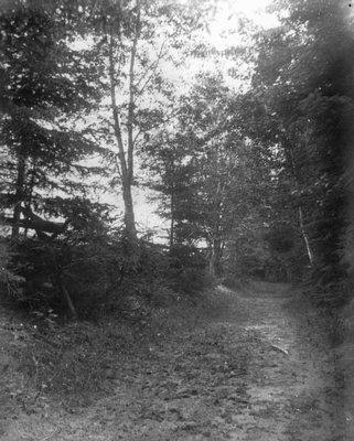 Lovers' Lane, ca.1890's.  Cavendish, P.E.I.