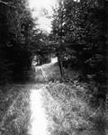 Lovers' Lane, second bridge, ca.1890's.  Cavendish, P.E.I.