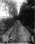 Lovers' Lane cherry tree view, ca.1890's.  Cavendish, P.E.I.
