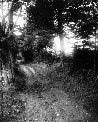 Lovers' Lane, spruce view, ca.1890's.  Cavendish, P.E.I.