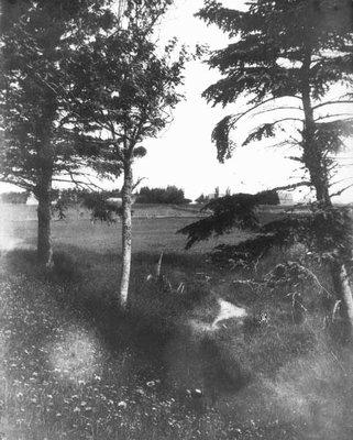 Hill Spring, ca.1890's.  Cavendish, P.E.I.