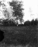 White lady view, ca.1890's.  Cavendish, P.E.I.